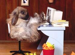 Easter Deal Computer EasterComputer.jpg.png Y